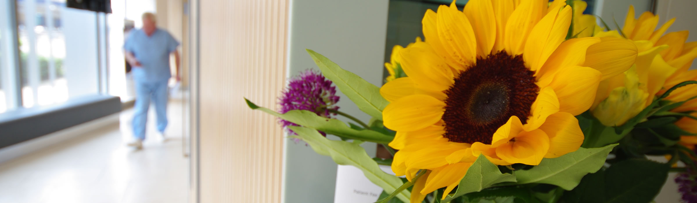 Corridor area owith flowers at Senova Dental Studios Watford dentist in Hertfordshire