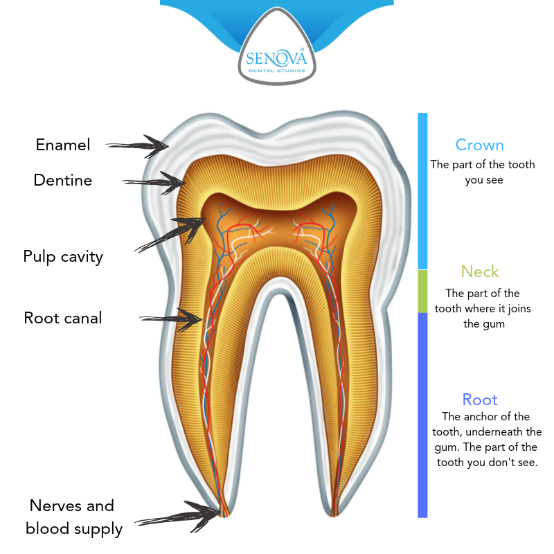 A tooth diagram